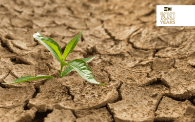 Drought Assistance Tools & Resources for Producers